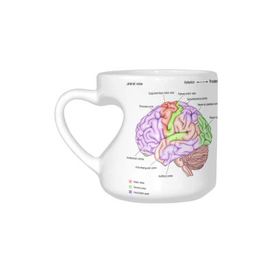 InterestPrint White Ceramic White Anatomy of the Human Brain Heart-shaped Coffee Travel Mug Cup with Sayings, Best Friends Friendship Mom Funny Unique Birthday Gifts