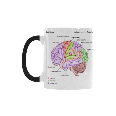 InterestPrint 11oz Love Anatomy of the Human Brain Morphing Mug Heat Sensitive Color Changing Coffee Mug Cup with Quotes, Unique Funny Birthday Christmas Gifts for Men Women Him Her Mom Dad